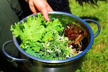 Fresh Picked Salad