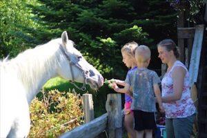 Feeding Flash the Horse