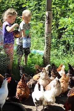 Kids Feeding Chickens