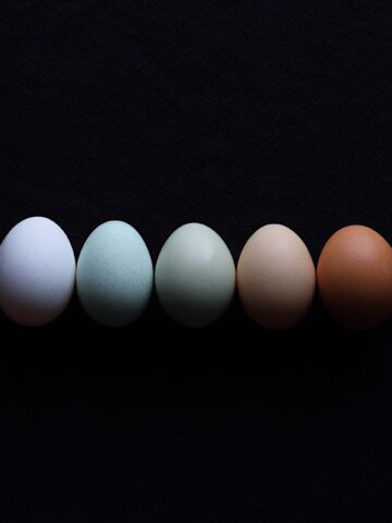Colored Eggs From Different Breeds Of Chickens