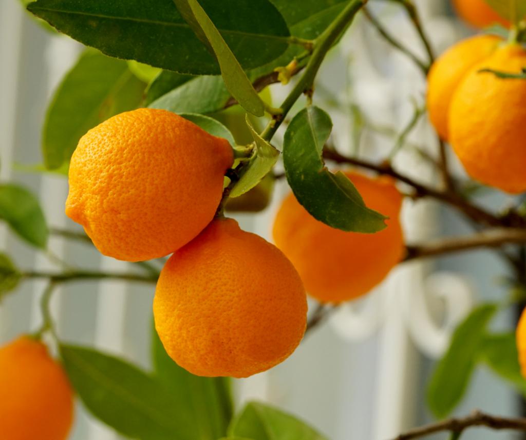 Fresh Oranges Make The Best Orange Vinaigrette