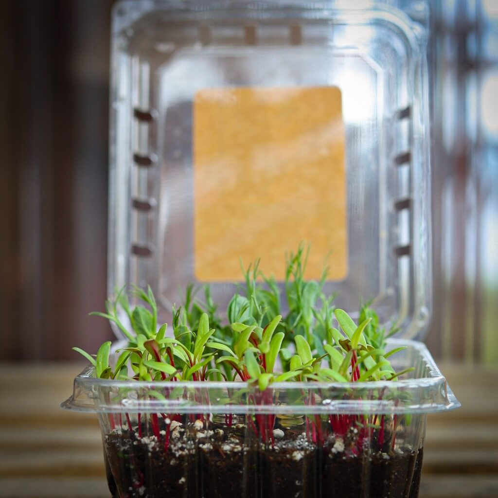 A Simple Tray For Growing Microgreens