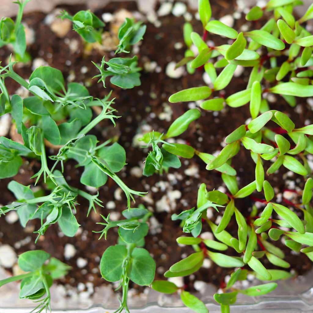 Plant Micro Seeds Densely To Maximize Space